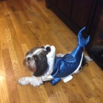 hallowen shark